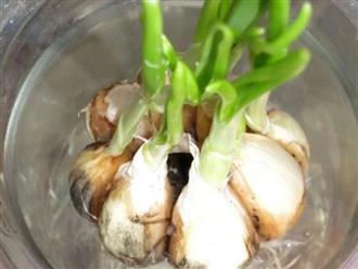 Cách trồng 5 loại cây gia vị hay dùng mà chẳng cần hạt giống, vừa tiết kiệm lại an toàn