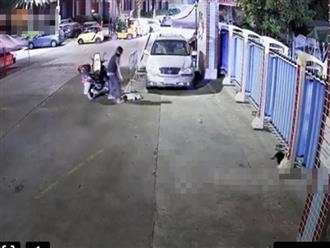 Thấy bầy chó đang chơi bên đường, 'cẩu tặc' đánh bả rồi chờ con vật gục ngã, bế thốc nhét vào cốp xe