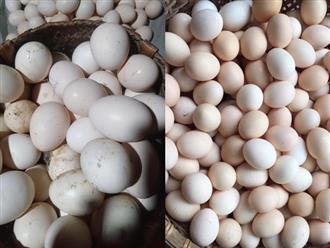 Người bán trứng lâu năm tiết lộ 5 mẹo giúp bà nội trợ Việt chọn chuẩn trứng gà ta, không bao giờ nhầm lẫn với trứng gà công nghiệp
