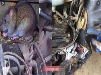 Mẹo hay chống chuột chui vào xe máy cắn đứt dây điện và dây xăng