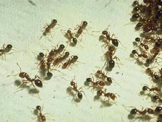Lấy quả chanh làm điều đơn giản này trong nhà chẳng bao giờ có con kiến nào mà không cần thuốc diệt