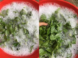 Đăng ảnh rửa rau với… xà phòng, cô nàng khiến dân mạng hoang mang cực độ: Sự thật là gì?