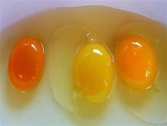 Đập trứng gà ra bát thấy lòng đỏ đậm và nhạt khác nhau, loại nào nhiều chất hơn?