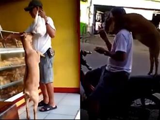 Kỳ lạ chú dê đi mua bánh với chủ, hết vòi ăn lại nhảy lên xe máy ngồi không khác gì cún cưng