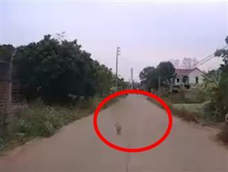 Thót tim clip em bé chập chững bước ra giữa đường khi ô tô đang lao đến và cái kết