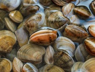 """Người Nhật chỉ mất 10 phút để nghêu, sò nhả hết cát, rau héo được """"hồi sinh"""", thịt cá tươi roi rói nhờ cách pha nước đơn giản không ngờ"""