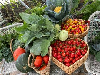 Bí kíp 'đỉnh của chóp' cho ai lỡ dấn thân vào 'con đường nghiện ngập' trồng rau sân thượng
