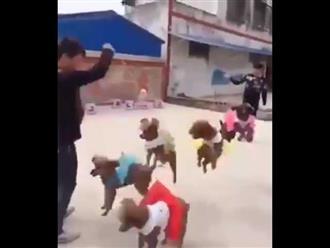 Tròn mắt xem 5 chú chó nhảy dây cùng lúc cực điệu nghệ
