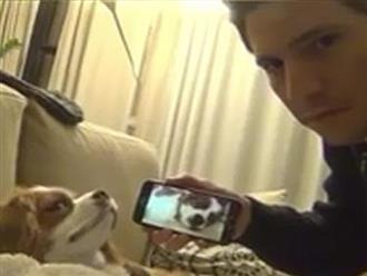 Cười vỡ bụng với cách trị ngủ ngáy cho cún cưng
