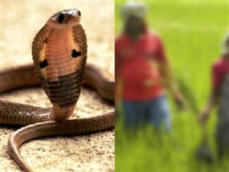 Bị rắn độc cắn, chồng cắn luôn vợ để đoàn tụ dưới 'suối vàng' và kết quả bất ngờ