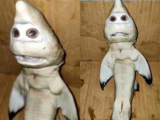 Cá mập mang thai mắc lưới, ngư dân sững sờ khi nhìn thấy thứ trong bụng con vật