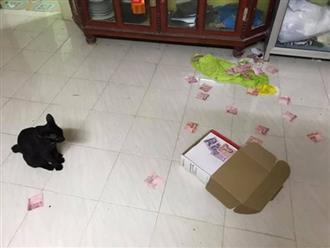 Vợ phát hiện 'bí mật thầm kín' của chồng nhờ con mèo vô tình làm rơi hộp giấy trên nóc tủ