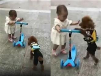 """Cười rụng rốn với clip chó """"thành tinh"""" cướp xe trượt của em bé rồi lái đi"""