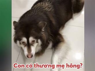 Kinh ngạc chú chó biết nói chuyện nhưng tình cảnh 'bi đát' sau đó khiến dân mạng cười xỉu