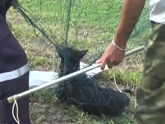 Chú chó đang đi thì bị tấm lưới rách 'chạy ẩu va vào người' và màn giải cứu ly kỳ