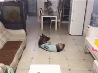 Chú chó đang nằm thì bật dậy vì tiếng chuông báo thức, diễn biến sau đó khiến người xem ngỡ ngàng