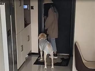 Đi làm để chó cưng ở nhà một mình, chủ kiểm tra camera và phát hiện sự thật không tin nổi