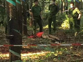 Phát hiện thiếu nữ 16 tuổi chết lõa thể trong rừng cao su ở Bà Rịa - Vũng Tàu, nghi bị sát hại