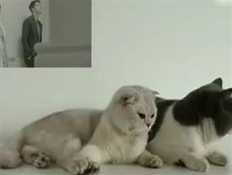"""Cười bể bụng với clip chế """"Hậu duệ mặt mèo"""""""