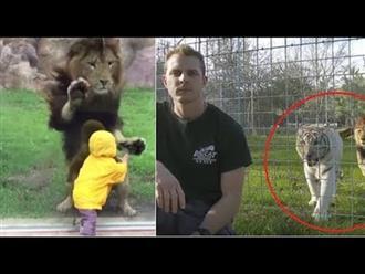 Bi hài những vụ động vật nổi khùng tấn công người