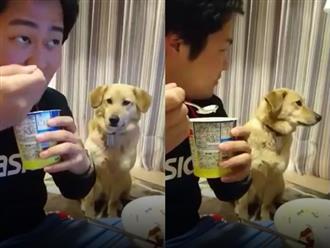 Chú chó phản ứng cực đáng yêu khi nhìn chủ ăn kem