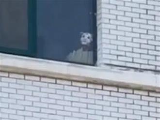 Kinh hoàng phát hiện người hàng xóm mặt trắng bệch nhìn trộm phòng tắm, chủ nhà hoảng hốt và bất an nên đăng đàn thảo luận cùng dân mạng