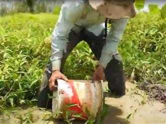 Lấy xô tát bùn trong ao cạn nước, chàng trai phát hiện nhiều thứ ngỡ ngàng