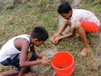 Mãn nhãn cảnh cá lũ lượt 'chơi cầu tuột' sau cơn mưa, hai bé trai ngồi một chỗ cũng bắt được cả xô đầy ắp