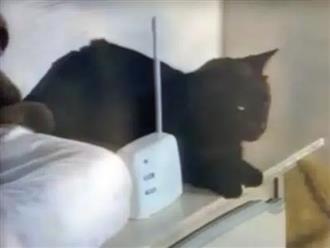 Mèo cưng rên rỉ nhìn vào camera trong phòng ngủ con gái, mẹ chạy đến kiểm tra thì đứng tim với cảnh tượng trước mắt