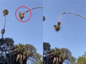 Người đàn ông cầm cưa máy vắt vẻo trên cây cao tít và cái kết siêu ngầu khiến Tôn Ngộ Không tái thế cũng chào thua