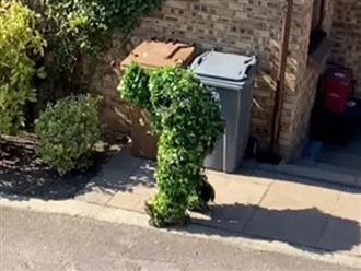 Ở nhà cách ly chán quá, 3 bố con hóa trang thành bụi cây và bịch rác trốn ra ngoài chơi khiến dân tình cười không nhặt được mồm