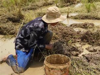 Ra ruộng khô cạn nước giữa trưa nắng, chàng trai phát hiện điều kỳ diệu dưới lớp bùn nhão
