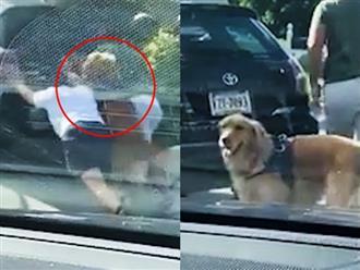 Thấy chủ đẩy xe mệt nhọc, chú chó có hành động bất ngờ khiến dân tình rần rần thích thú