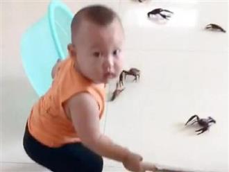 Vừa đi vệ sinh có mấy phút, mẹ sốc nặng khi thấy hành động của con trai với đống tôm hùm đất mới mua