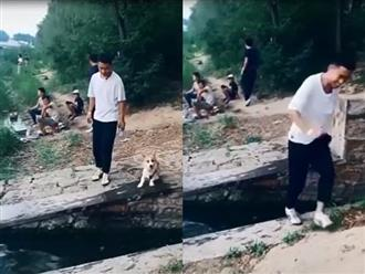 Bắt chước chủ nhảy qua mương nước, chú chó chân ngắn nhận cái kết không thể nào đắng hơn