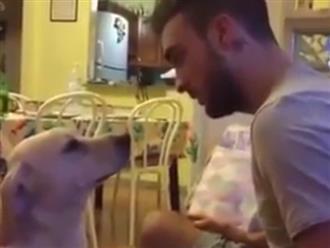Bị mắng vì tật phá đồ, chú chó làm nũng cực điêu luyện khiến anh chủ đẹp trai phải 'xuống nước'