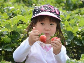 Cho trẻ ăn dâu tây có lợi ích gì mà nữ Youtuber Quỳnh Trần JP và bé Sa ăn ngon lành đến vậy?