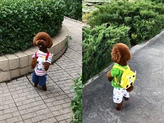 Chú chó siêu cưng, đi bằng hai chân cùng chủ dạo phố, mua đồ ở siêu thị cực giống con người