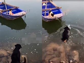 Chú chó thấy 'bạn gái' mắc kẹt trên thuyền liền 'liều mạng' nhảy xuống dùng cách này để giải cứu
