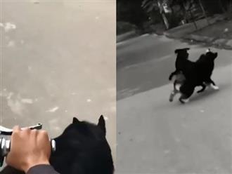 Chủ chở đi dạo, chú chó lưu manh nhảy xuống xe lao tới đánh nhau với con chó khác và cái kết