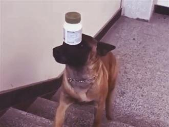 Chú chó làm xiếc cực chất, nhìn vẻ mặt 'căng như dây đàn' và đôi chân run rẩy mà thương