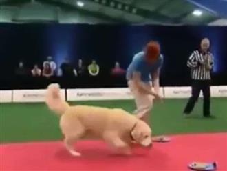 Dẫn chó cưng ham ăn đi tham gia cuộc thi, chủ nhân 'đội quần' vì tình huống hài hước không ngờ