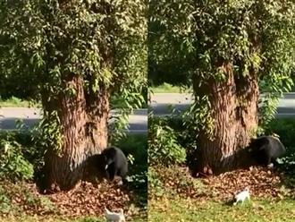 Gấu đen cao to có lá gan 'chuột nhắt' vào nhà dân định 'xin ăn' nào ngờ bị chó rượt chạy té khói cực buồn cười