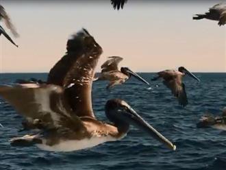 Hàng triệu con cá trôi dạt lên bờ khi thủy triều xuống và đành trở thành bữa ăn của đàn chim