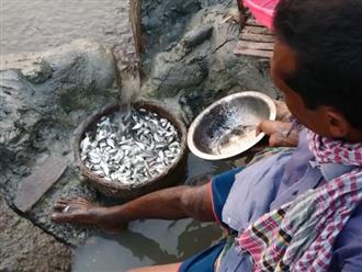 Người đàn ông đào cái đường nhỏ dẫn nước từ sông vào bờ, nào ngờ thu được toàn cực phẩm đã mắt ngon miệng