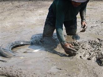 Phát hiện đàn cá lúc nhúc trong lốp xe trên ruộng sau cơn mưa, người đàn ông bắt không ngơi tay