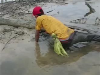 Sau cơn mưa lớn, thanh niên ra mảnh ruộng gần nhà mò mẫm dưới bùn đất hồi lâu bắt được hàng chục con cua khổng lồ
