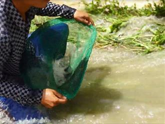 Sau cơn lũ nước đổ xuống ồ ạt, người đàn ông chỉ ngồi một chỗ mở miệng lưới, cá lớn tự động chui đầu vào nhiều không đếm xuể