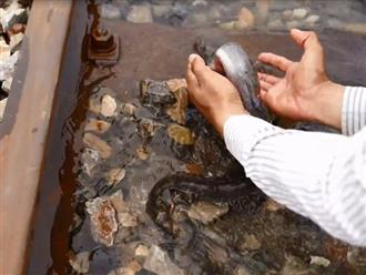 Trời mưa đường ray xe lửa ngập trong nước, người đàn ông xách giỏ ra bắt cá mỏi tay