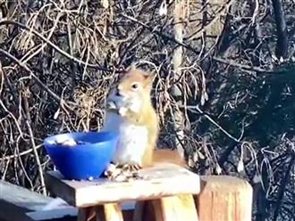 Trộm lê trong tủ lạnh ăn, nào ngờ chú sóc con 'say quắc cần câu' đi đứng không vững khiến dân tình cạn lời